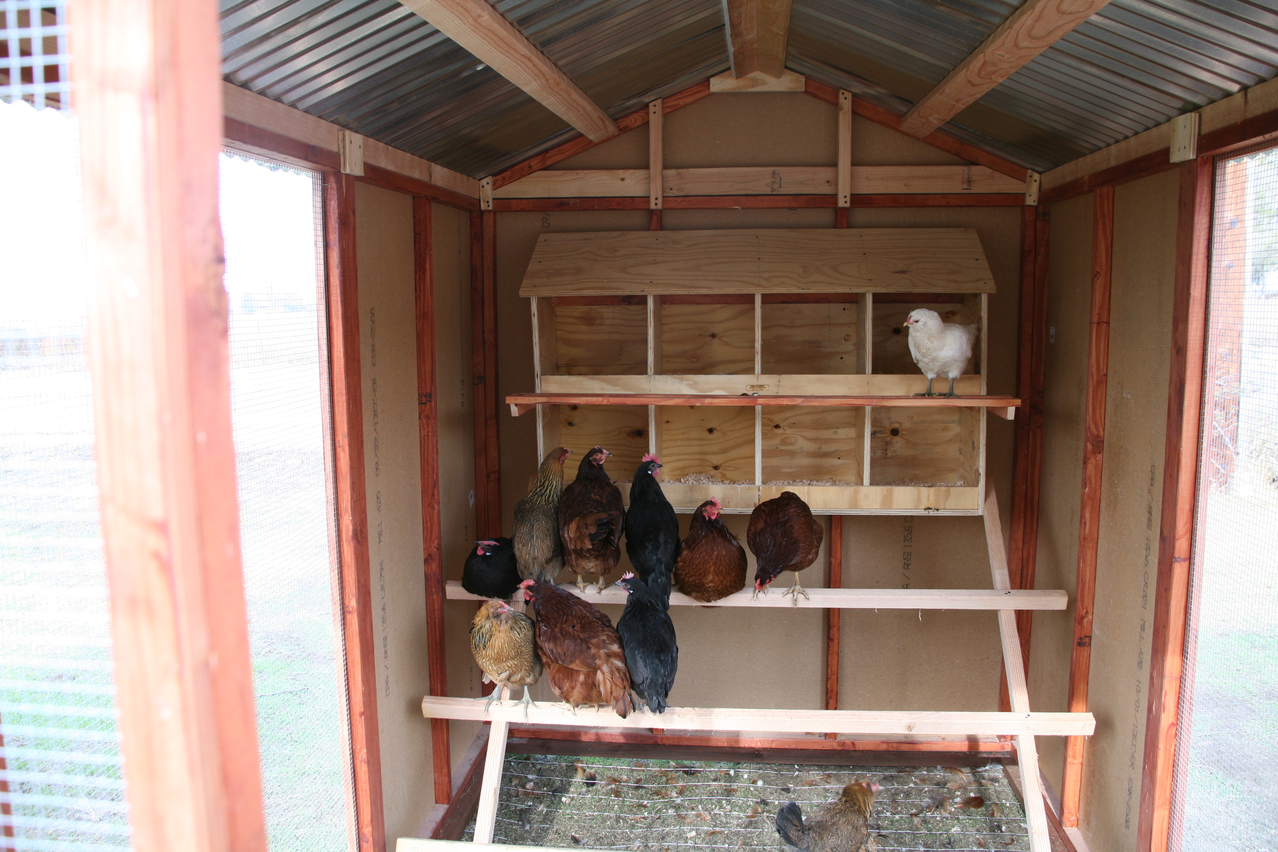 denny yam chicken coop ideas pictures details
